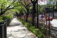 街路樹の様子